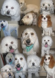 A Groovy  Dog Groomer  accepting new Clients